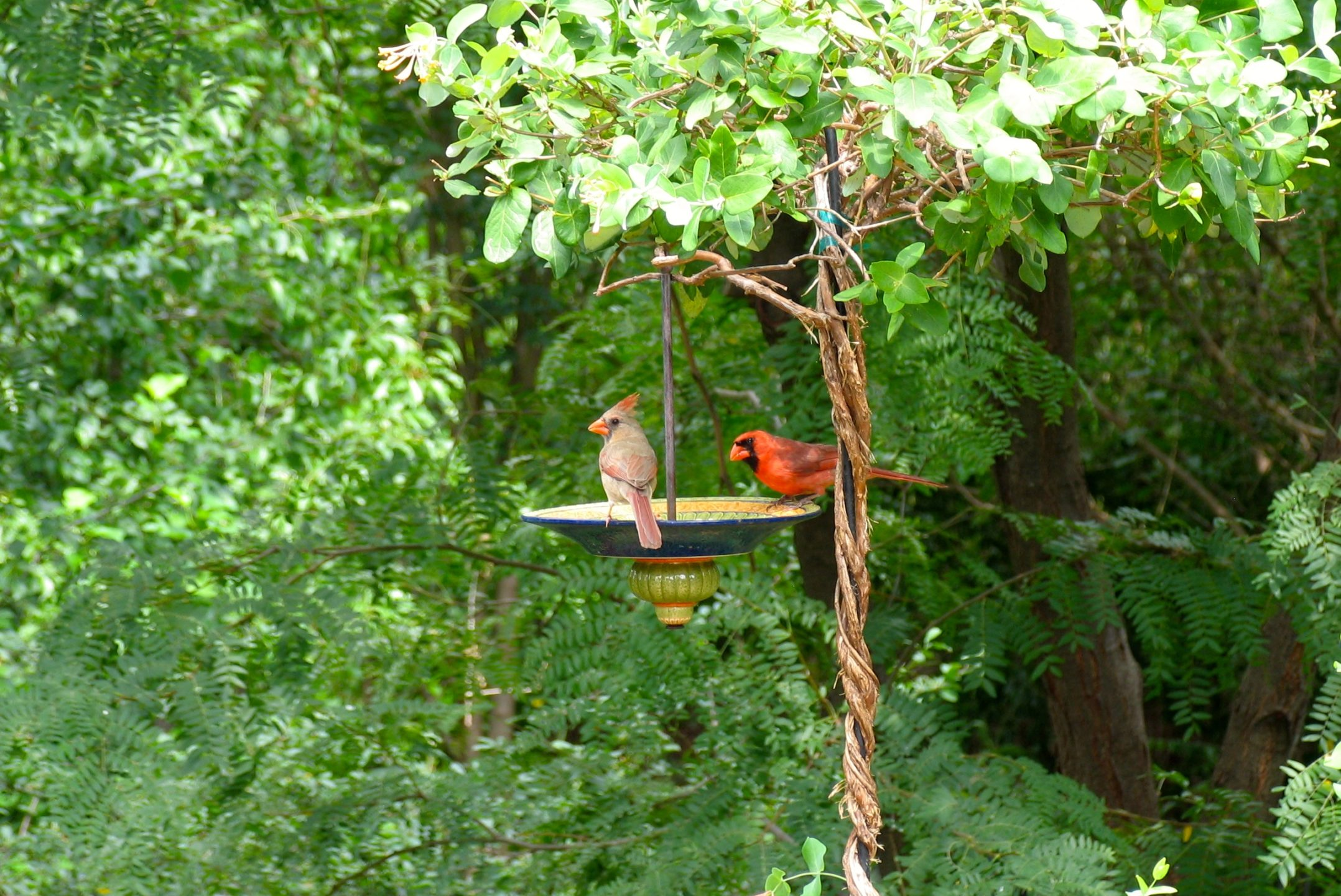 all about birds welcome wildlife