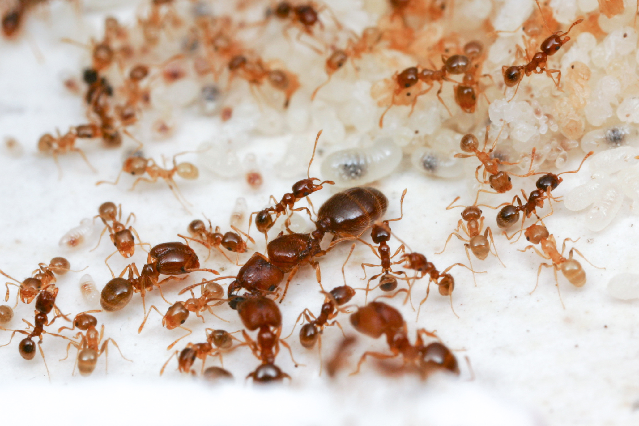 All about ants | Welcome Wildlife