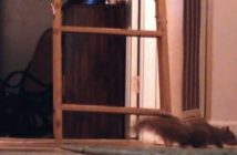 Squirrel running fast across the floor of a house with a ladder leading to the attic standing up behind it.