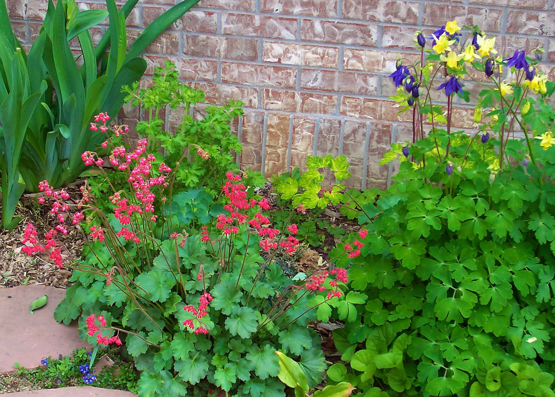 Spring flowering native plants for wildlife welcome wildlife coral bells and columbines in front of a brick wall mightylinksfo
