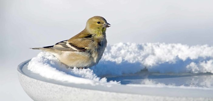 Prepare your yard for wildlife in winter