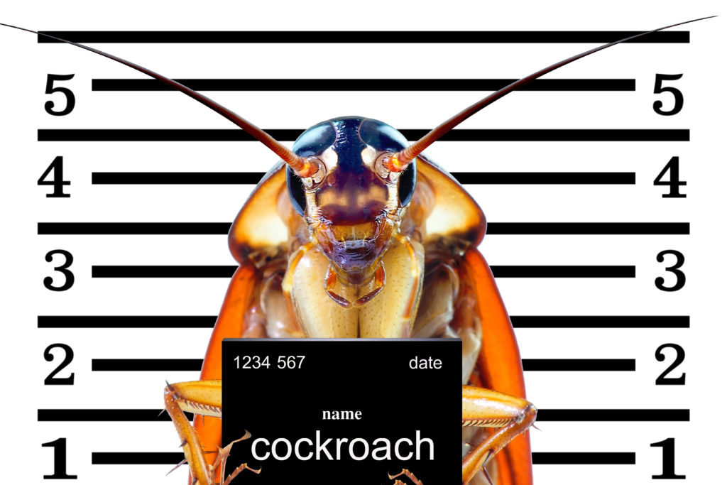 Cartoon of a cockroach mugshot in jail.
